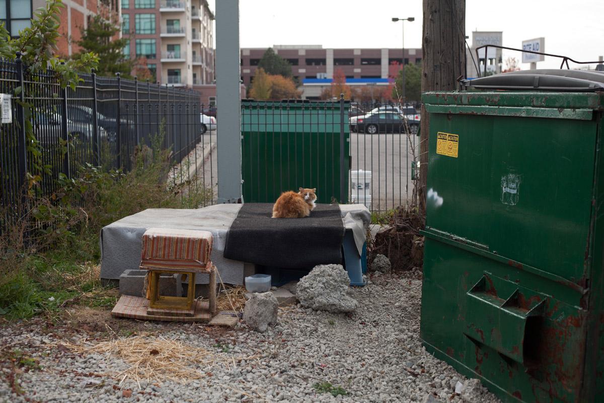 Interspecies synanthropic urbanism in Detroit.